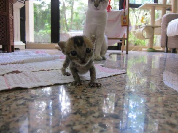 子猫 保護4