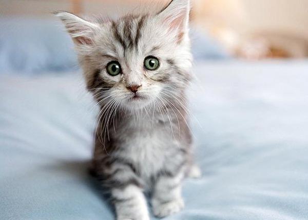 かわいい子猫画像32