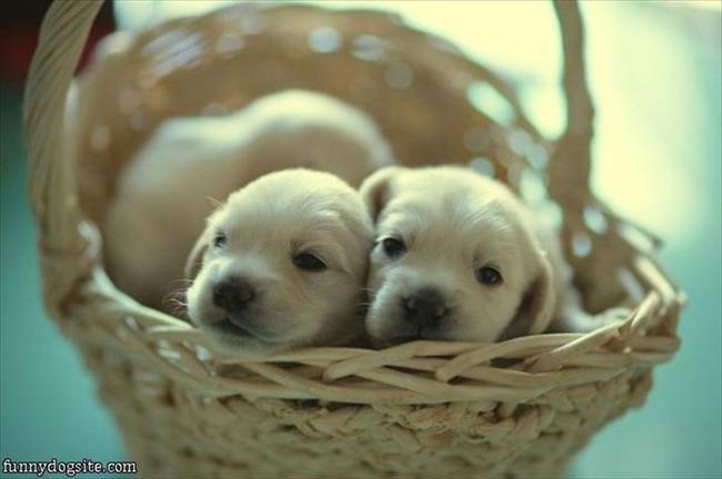 かわいい子犬画像80