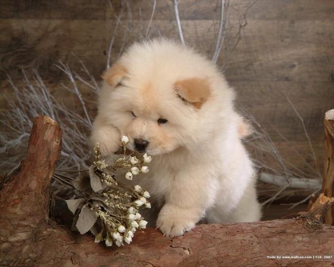 かわいい子犬画像34