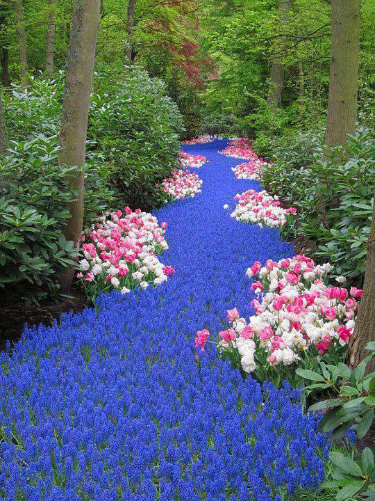 -River-of-Flowers-Keukenhof
