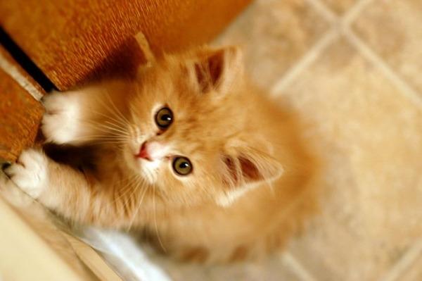 かわいい子猫画像214