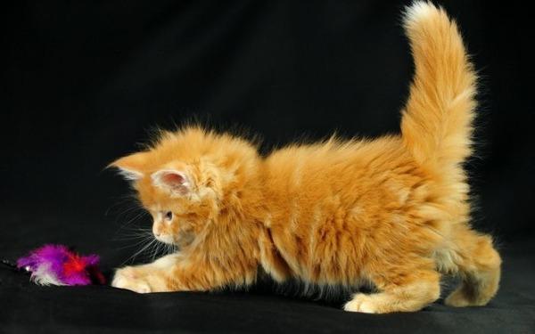 かわいい子猫画像344
