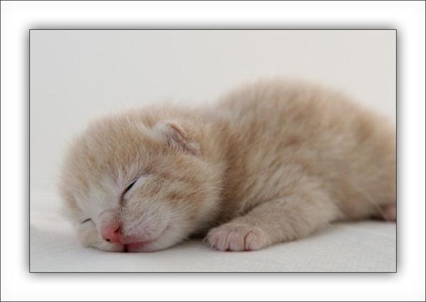 かわいい子猫画像28