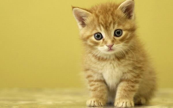 かわいい子猫画像325