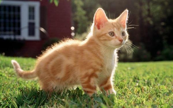 可愛い子猫画像39