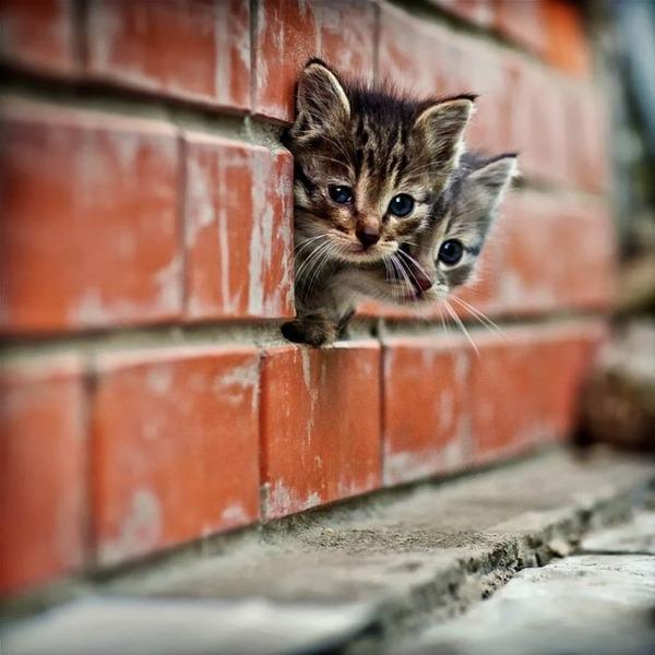 可愛い子猫画像4
