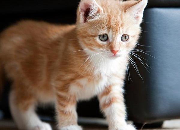かわいい子猫画像30