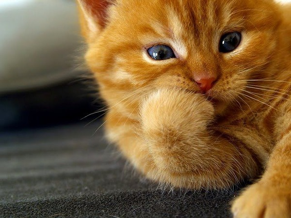 かわいい子猫画像317