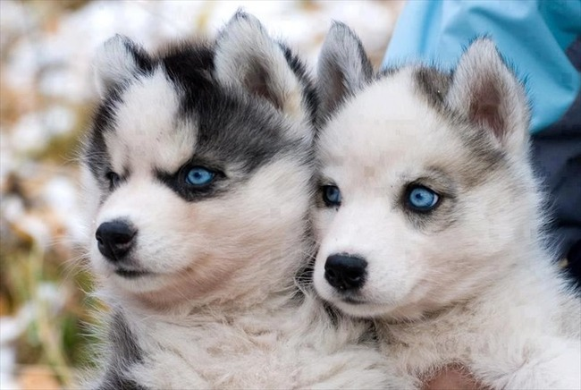 かわいい子犬画像36
