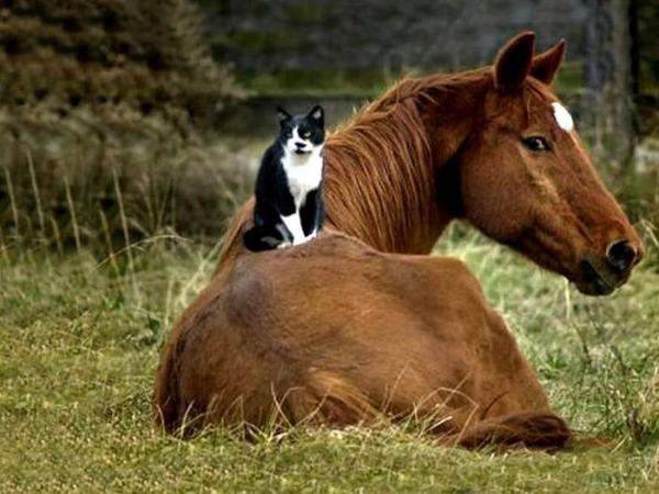 動物仲良し可愛い画像43