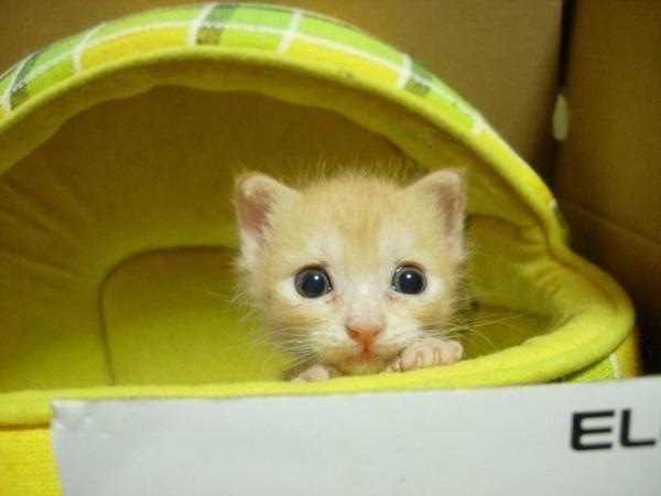 可愛い子猫画像22