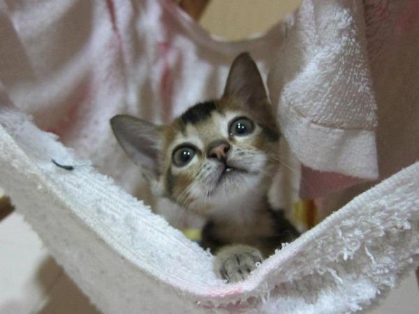 子猫 保護15