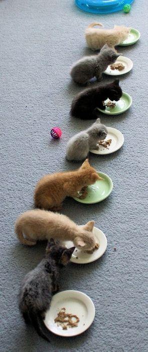 可愛い子猫画像25