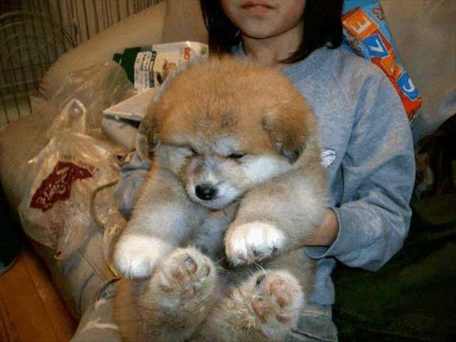 かわいい子犬画像13