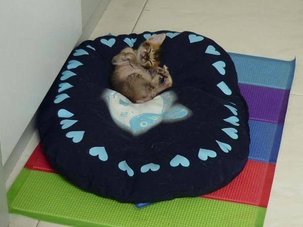 子猫 保護22