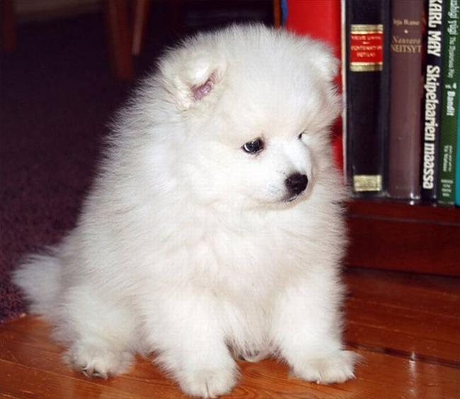 かわいい子犬画像66