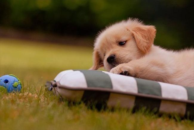 かわいい子犬画像129