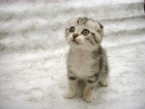 かわいい子猫画像29