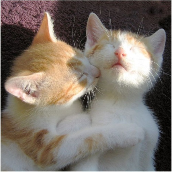 かわいい子猫画像349