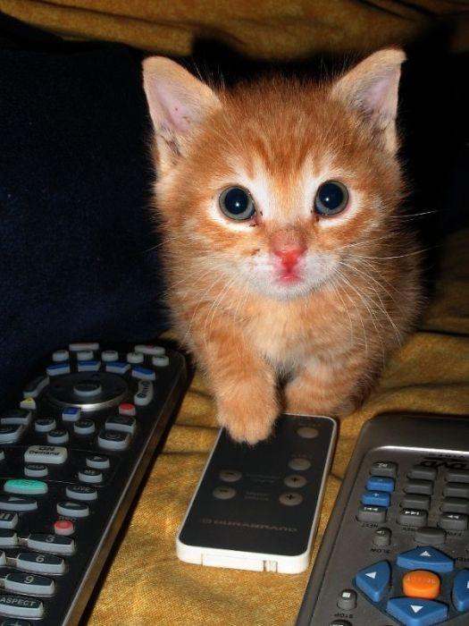 可愛い子猫画像27