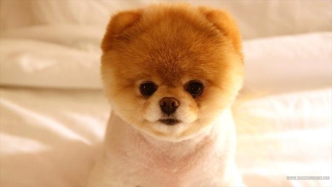 かわいい子犬画像53