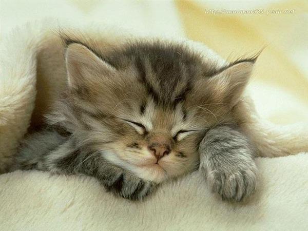 かわいい子猫画像328