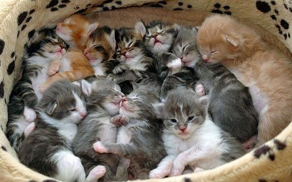 可愛い子猫画像15