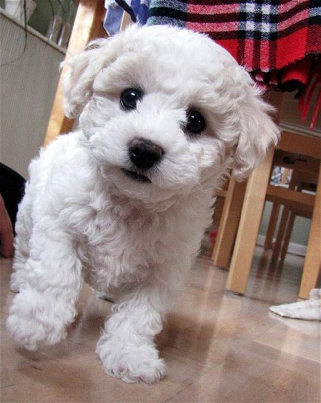 かわいい子犬画像136