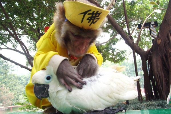 動物仲良し動画5