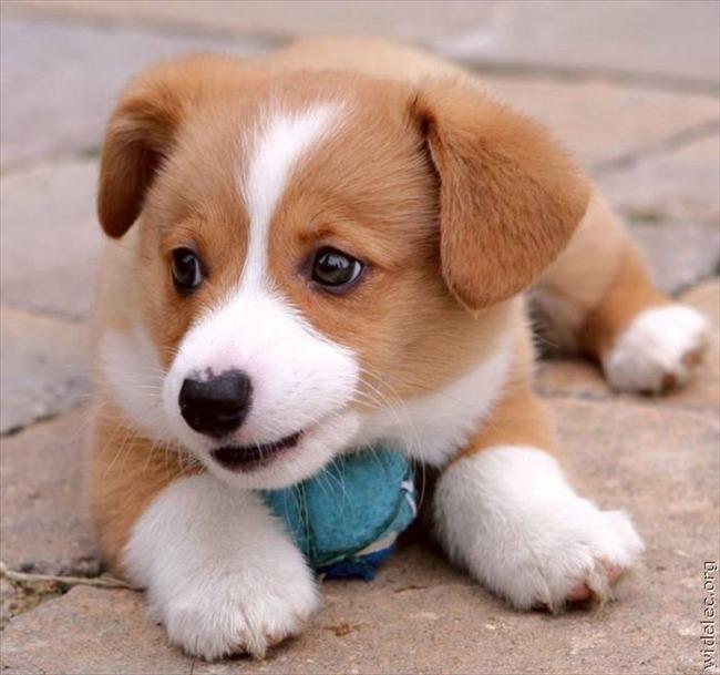 かわいい子犬画像71