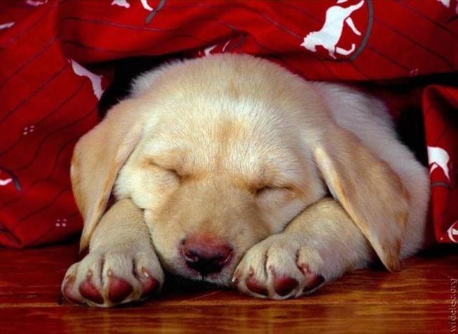 かわいい子犬画像73