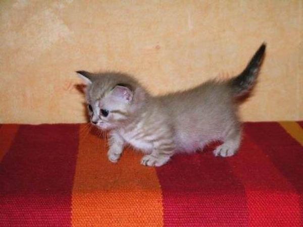 可愛い子猫画像0