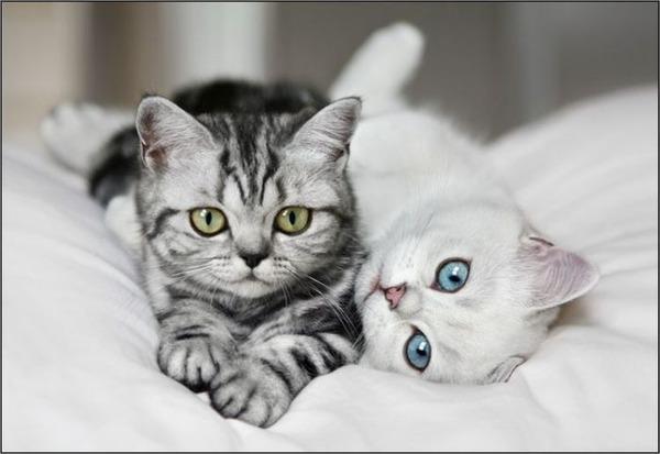 かわいい子猫画像320
