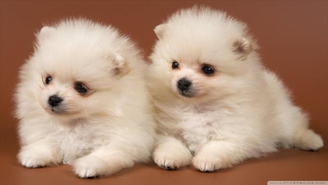 かわいい子犬画像44
