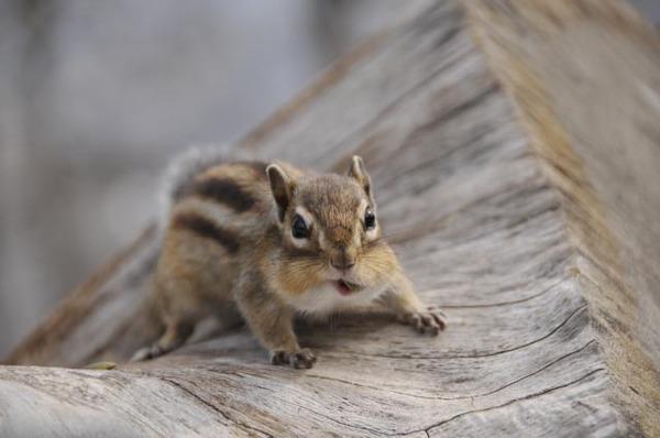 귀여운 다람쥐 17