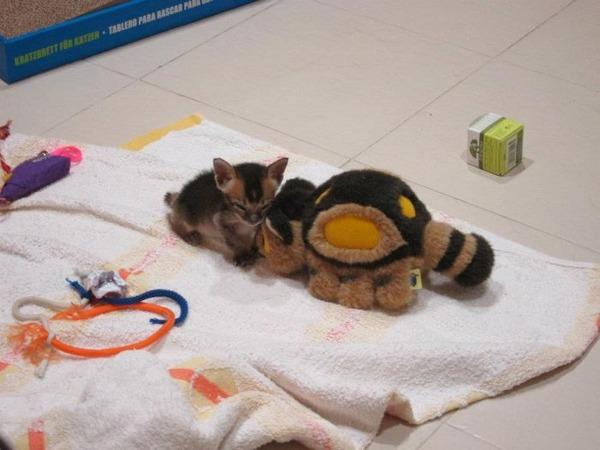 子猫 保護6
