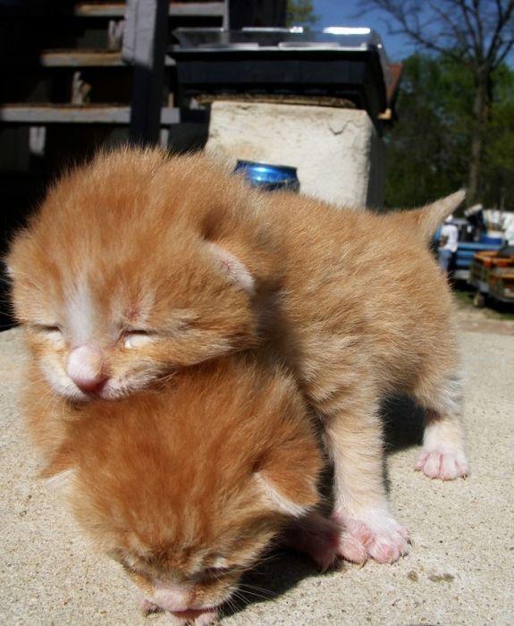 可愛い子猫画像16