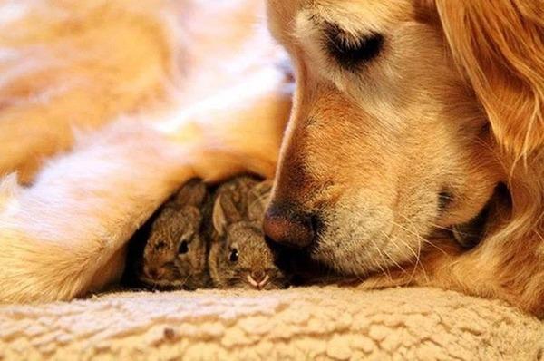 動物仲良し可愛い画像7