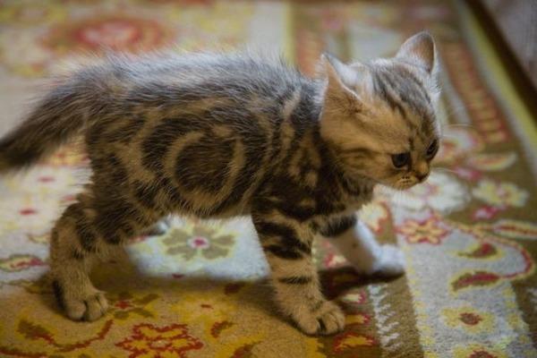 可愛い子猫画像2
