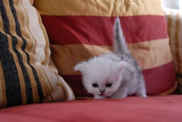 かわいい子猫画像27