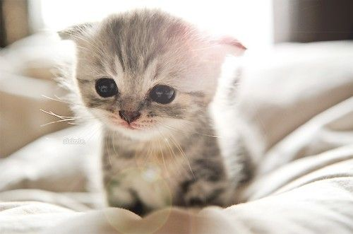 かわいい子猫画像335