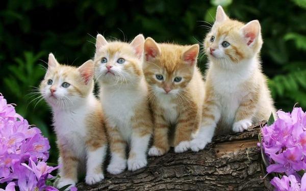 可愛い子猫画像41