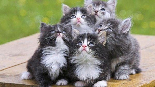 可愛い子猫画像38