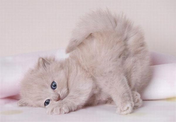 かわいい子猫画像321