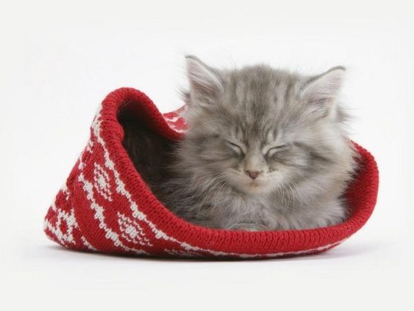 かわいい子猫画像342