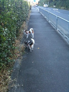 散歩IMG_6807