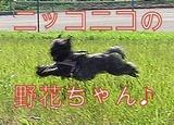 ニコニコ野花ちゃん」
