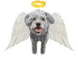 天使Dixieゴールド