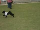 犬たまミロ走る